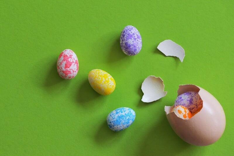 卵が割れた